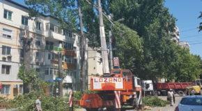 Lucrări de tăiere a arborilor, în municipiul Călărași