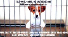 Serviciul Public pentru Gestionarea Câinilor Fără Stăpân – adopția la distanță