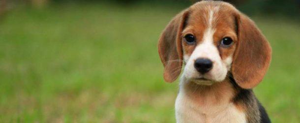 Obiectul de activitate al Serviciului Public pentru Gestionarea Câinilor fără Stăpân